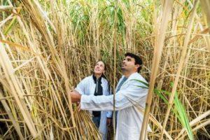 Bioeconomia: al via l'alleanza internazionale European Bioeconomy University