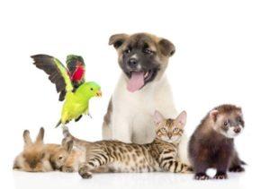 Protezione degli animali durante le catastrofi