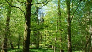 Progetti tradizionali 2019: Ambiente – Natura e Biodiversità